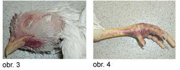 Ptačí chřipka - obr. 3 a 4.